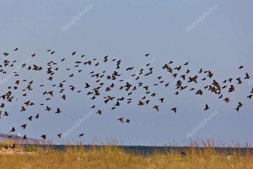 μαζικές φωτογραφίες πουλί