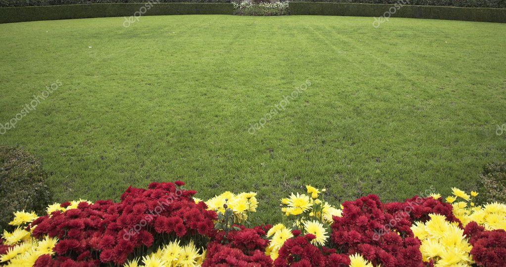 Grassy lawn.