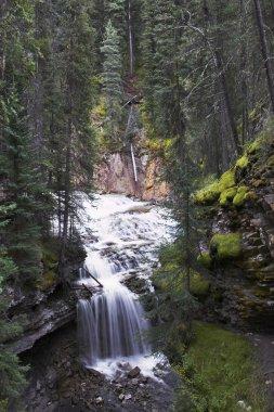 Falls in park Johnson