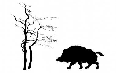 silhouette wild boar on white background