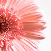Fényképek virág