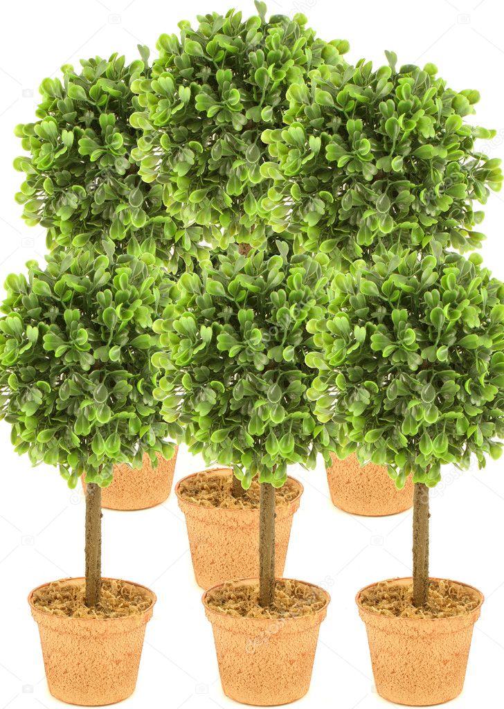 Arboles Pequenos Foto De Stock C Gvictoria 6752260 - Arboles-pequeos