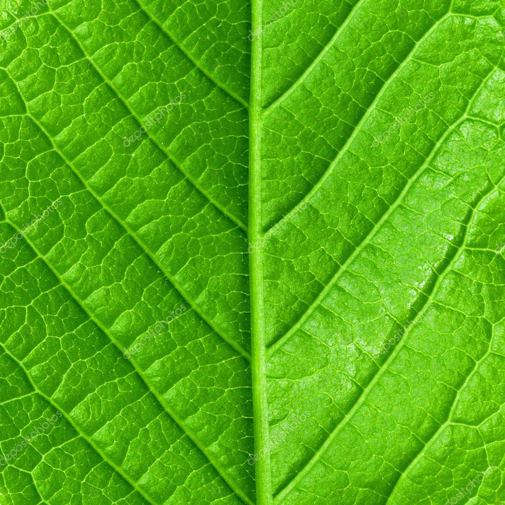 Macro di verde primavera giovani foglie isolate ad alta for Piani di coperta ad alta elevazione