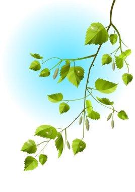 Realistic branch of birch