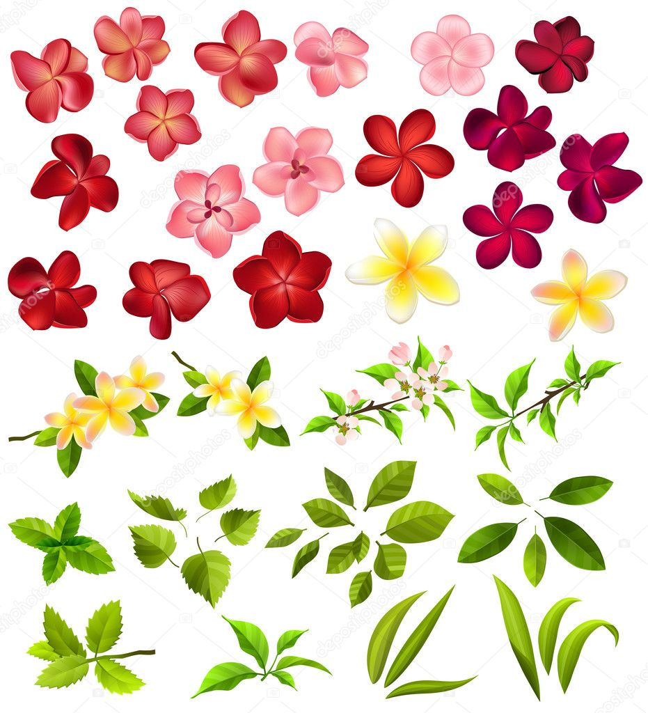 Collection of different flowers and leaves