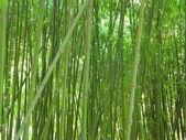 bambusový háj.