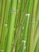 Fotografie bambusový háj.