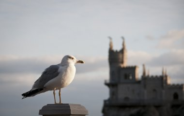 Seagull and Swallow's Nest, Crimea, Ukraine