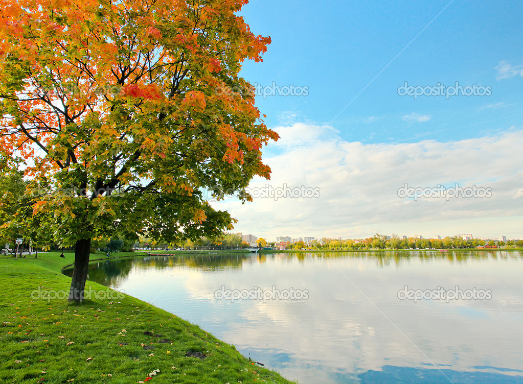 Colorful tree near the river