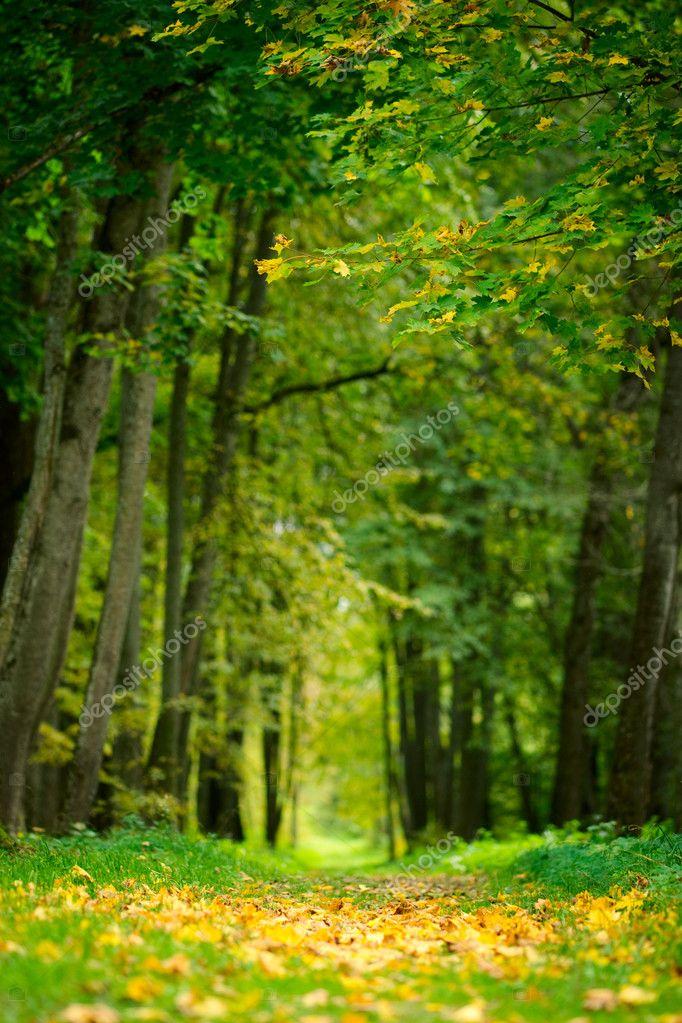 Фотообои Аллея с желтыми листьями