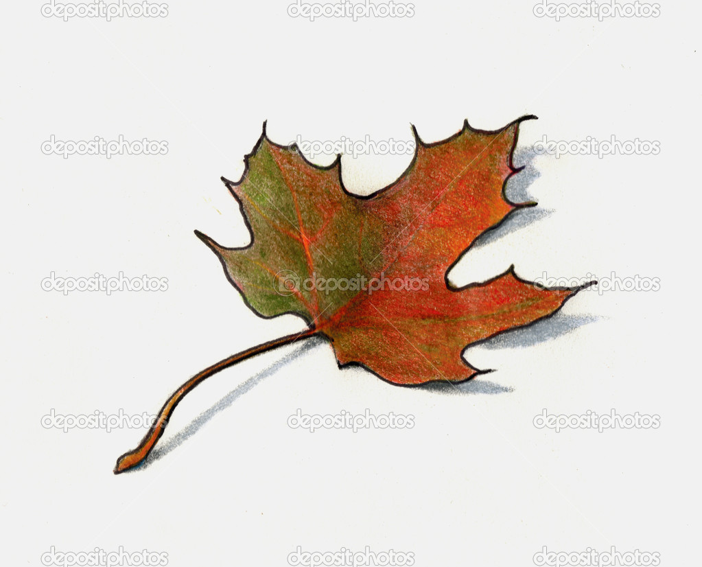 Leaf Drawing Color Color Pencil Drawing Of Maple Leaf In Autumn Stock Photo C Joyart 7517167