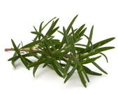 Photo Sweet rosemary leaves