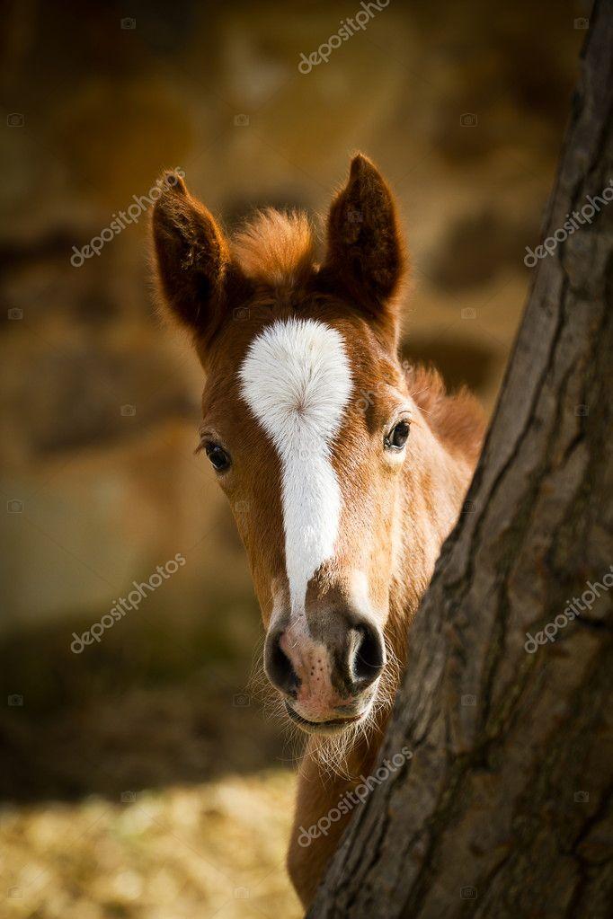 Playful Appaloosa Foal