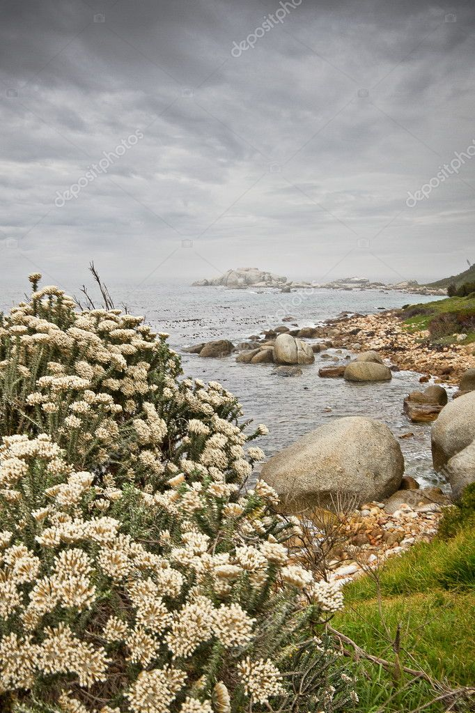 Fynbos flowers along the Southern Cape coastline.