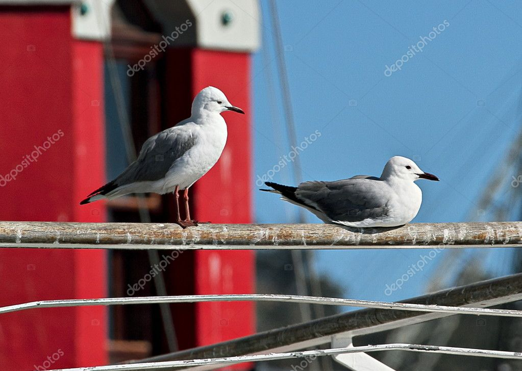 Seagulls overlooking Table Bay Harbour.