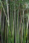 Zelená zen bambus