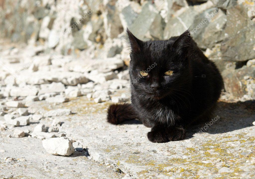 černá pátek kočička