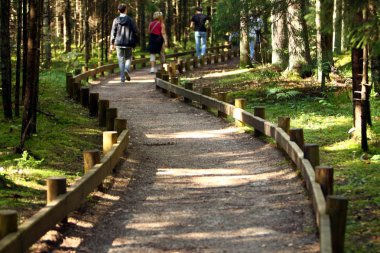 Trail in forest for tourist