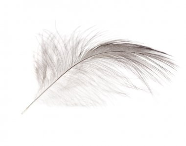 Isolated light single feather