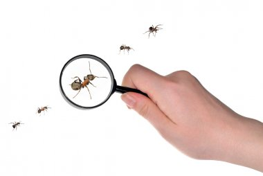 Magnifying in hand and ants line