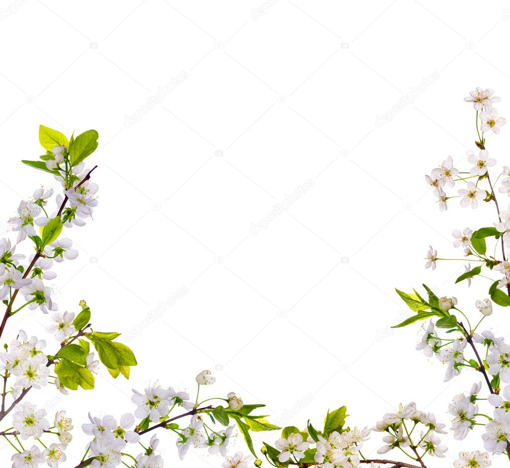 Cherry Tree Flowers Half Frame Stock Photo 169 Dr Pas 6784928