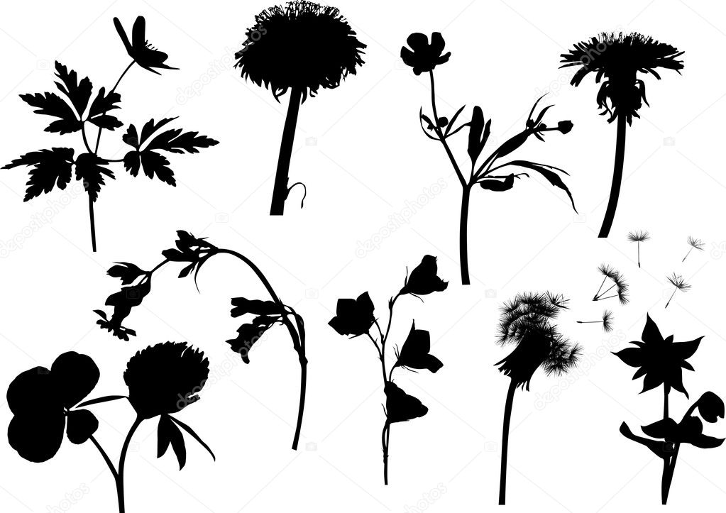 wild flowers silhouettes isolated on white
