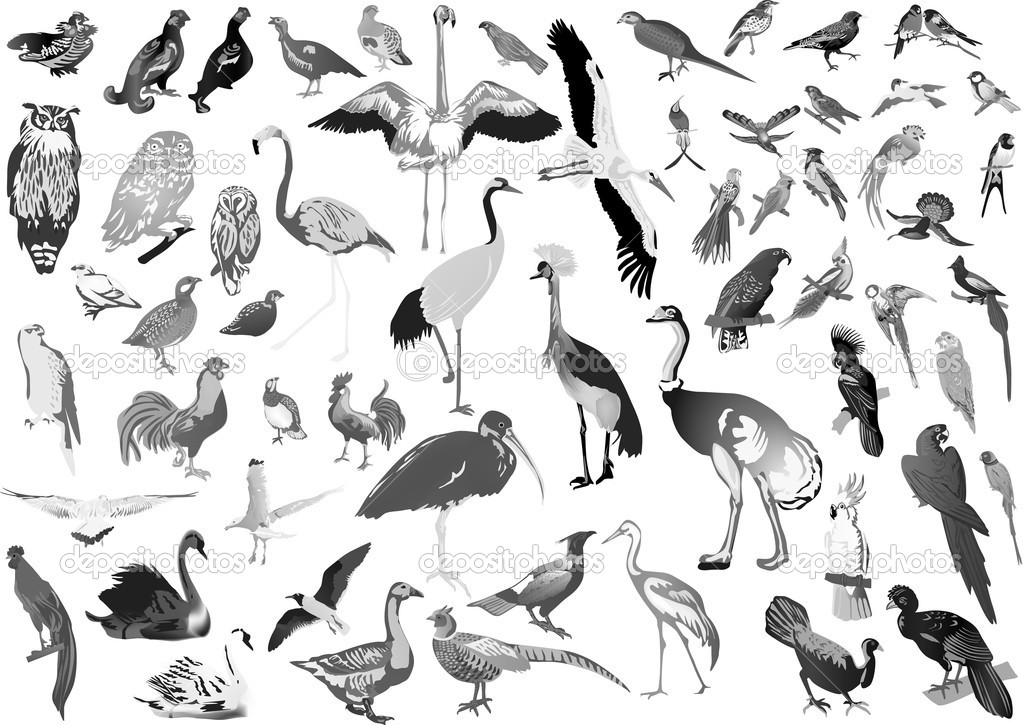 Gray Birds Large Collection On White Stock Vector C Dr Pas 7199342