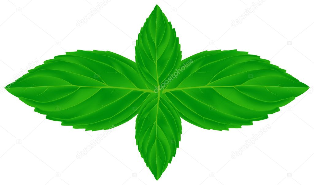 four mint leaves illustration