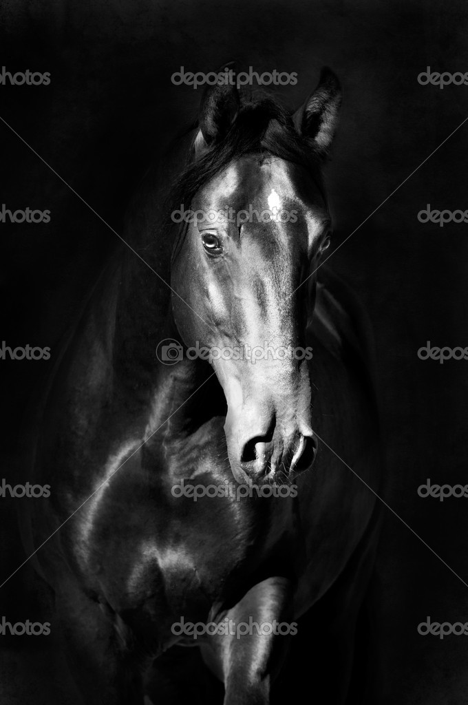 Black kladruby horse portrait in the darkness