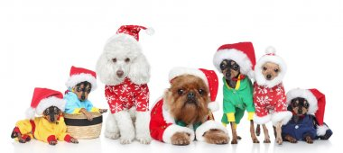 Group of purebred dogs in Christmas hats