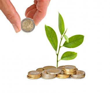 Citrus sapling growing from pile of coins