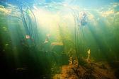 Krásný podvodní pohled rybníka