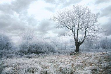 Gloomy day in winter
