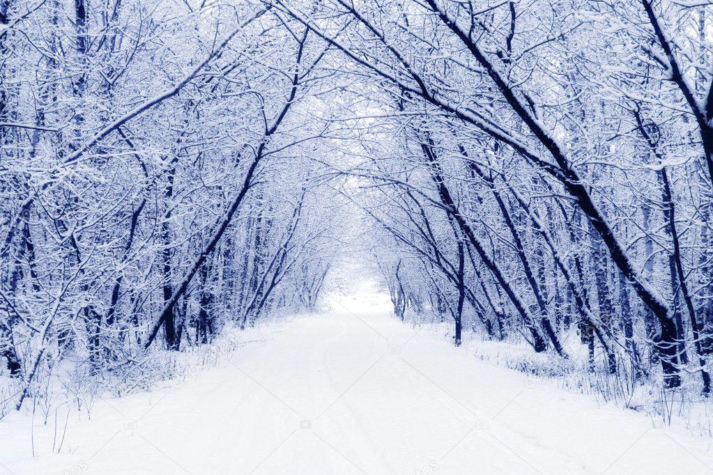 Фотообои Winter