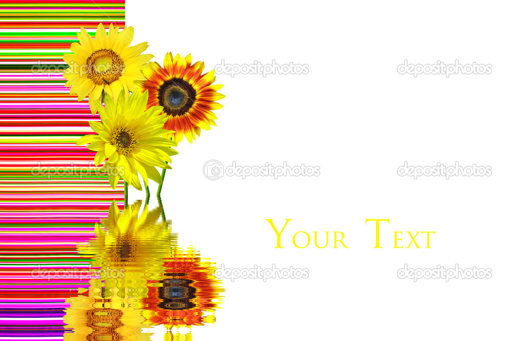 sunflower business card stock photo