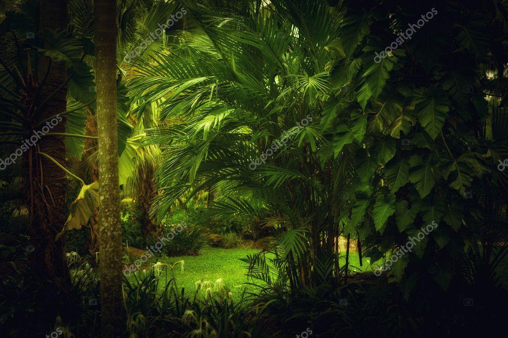 Junglejungle