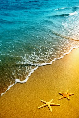 Starfish on sand and wave