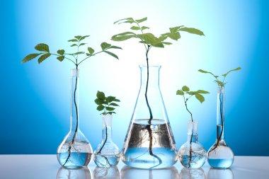 Plants and laboratory