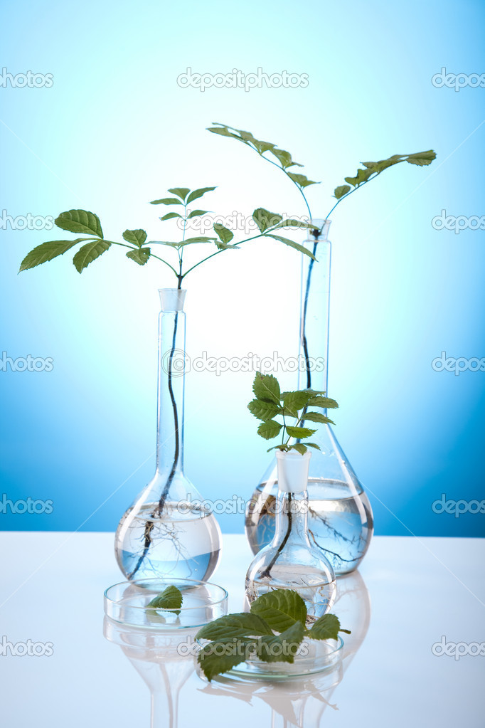 matériel de chimie, verrerie de laboratoire de plantes — Photographie JanPietruszka © #7137544