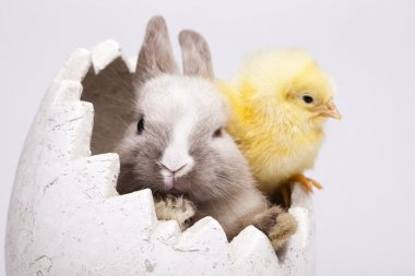 Chick and bunny