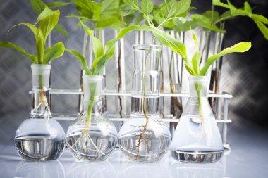 Plant laboratory