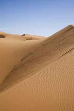 Moroccan desert dune, merzouga