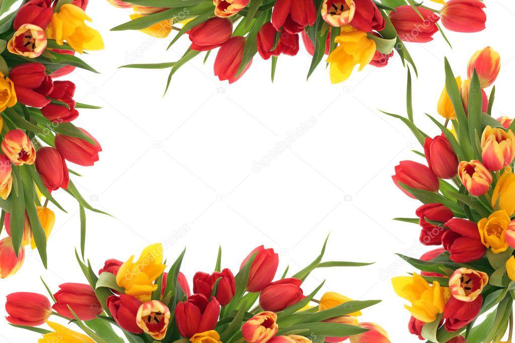 Tulip Bloemenrand Stockfoto Marilyna 7951839