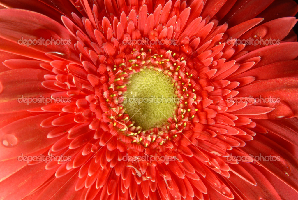 Red flower spring time background