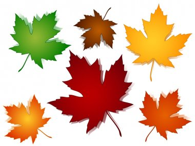 Maple leaves fall color options