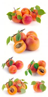 Set apricot with leaves