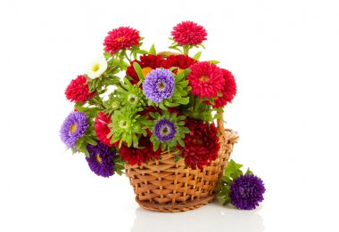Colorful Asters flowers in cane basket