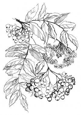Rowan branch