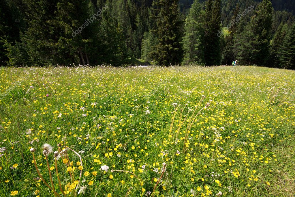 Flowery meadow in Val Gardena