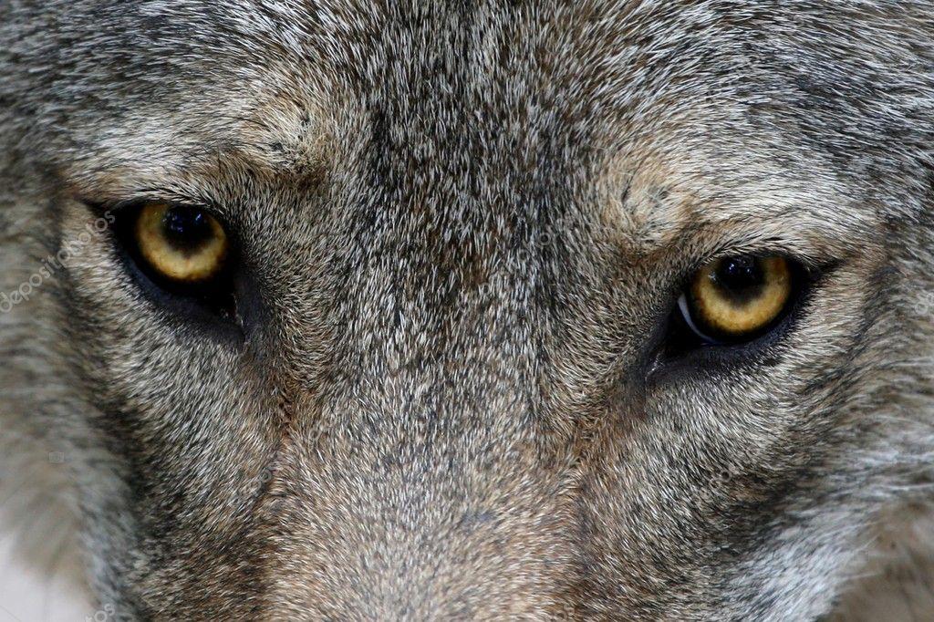 скачать торрент глаз волка - фото 11